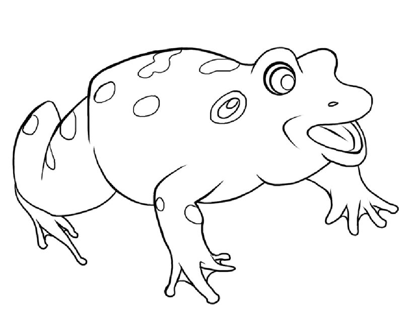 Coloring Pages Of A Frog