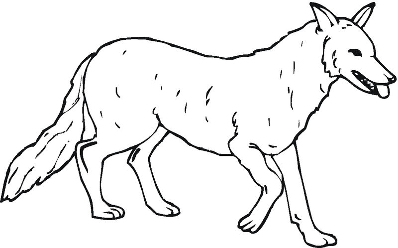 Coloring Pages Of A Wolfs