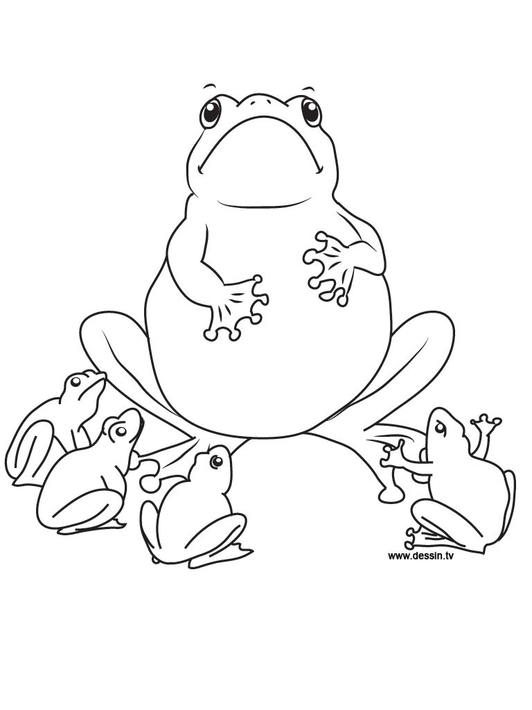 Coloring Pages Of Frogs Printable