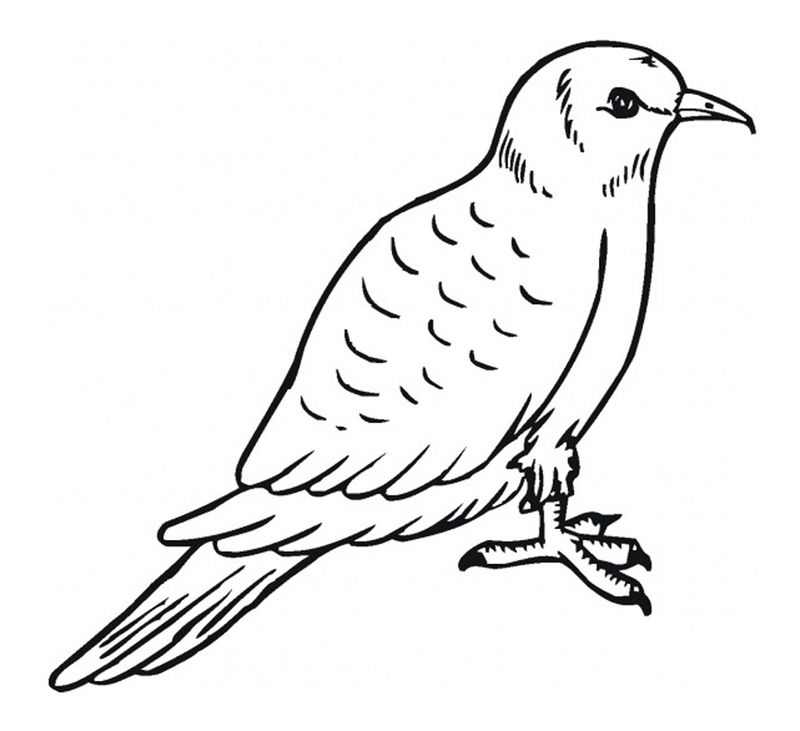 Coloring Pages Of Pigeon 001