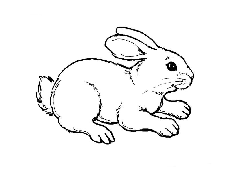 Colouring Pictures For Children Animals