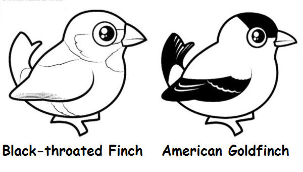 Cute American Birds Coloring Pages