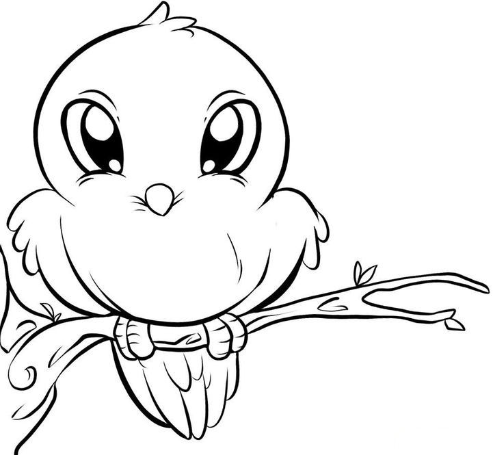 Cute Birds Coloring Pages