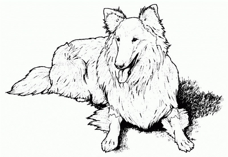 Dog Coloring Pages Online