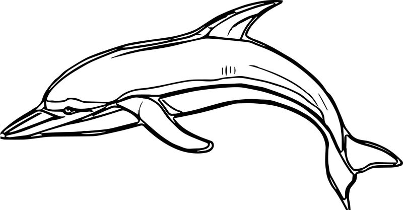 Dolphin Coloring Page 020