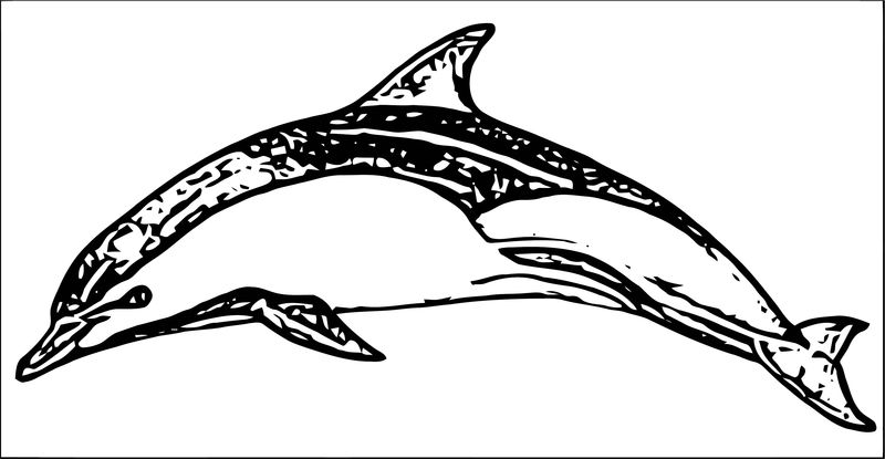 Dolphin Coloring Page 035