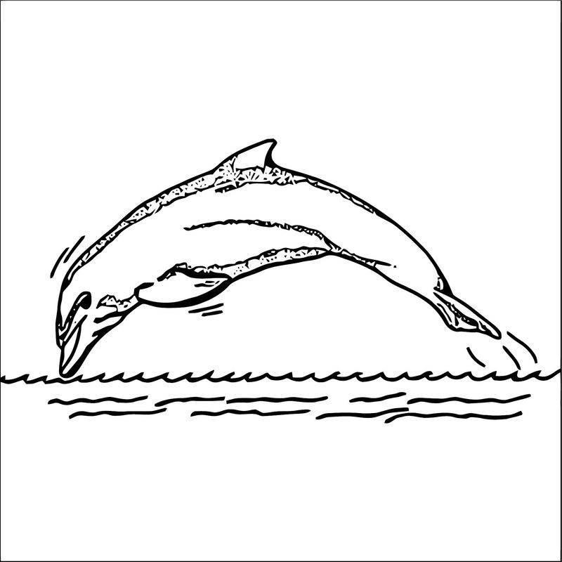 Dolphin Coloring Page 055