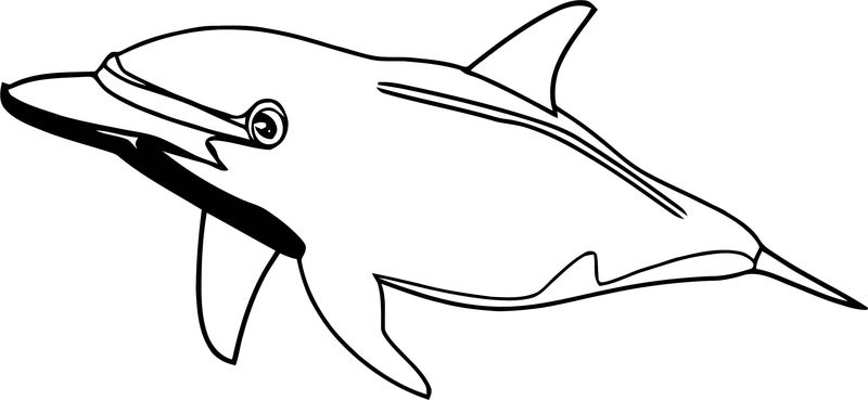 Dolphin Coloring Page 092