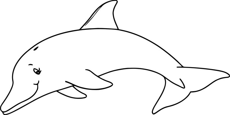 Dolphin Coloring Page 153