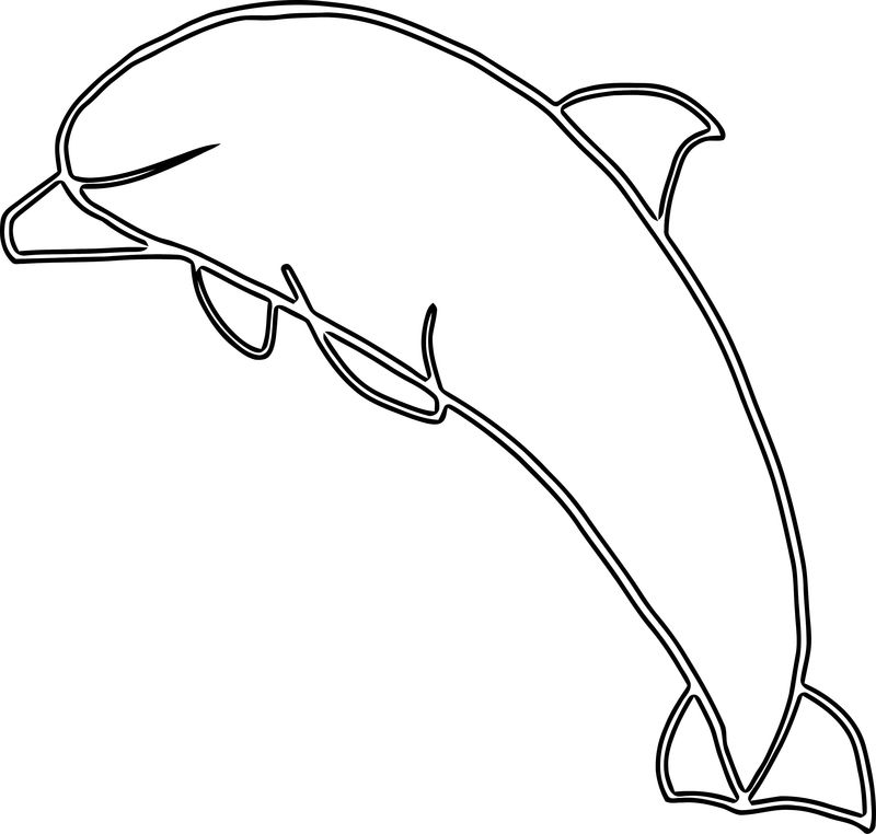 Dolphin Coloring Page 167