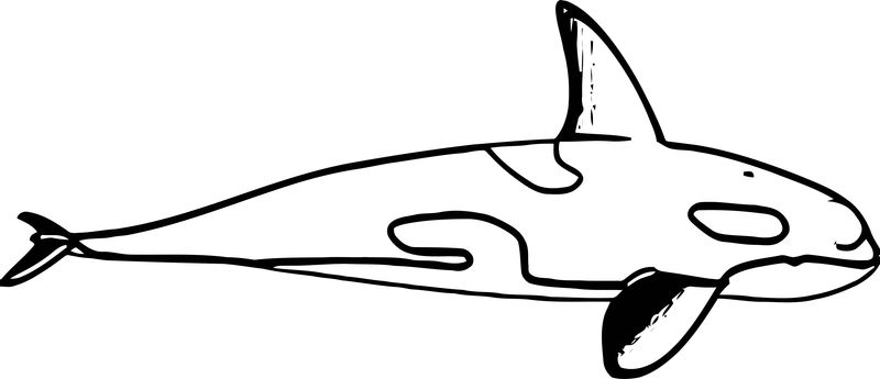 Dolphin Coloring Page 177