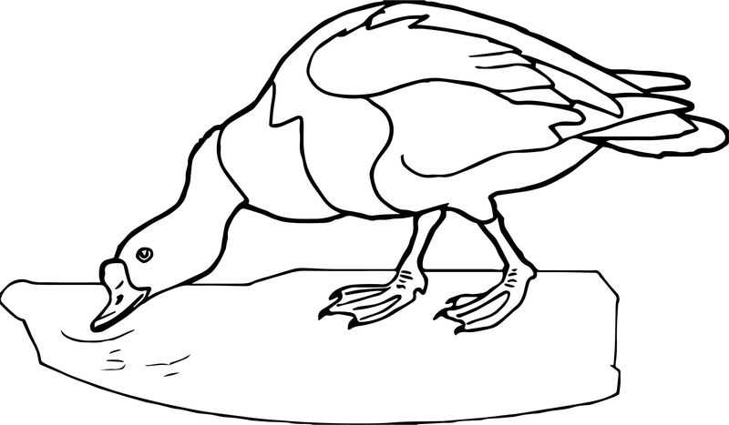 Duck Eating Water Lake Coloring Page