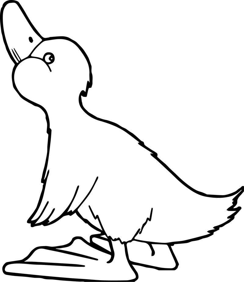 Duck Looking Up Coloring Page