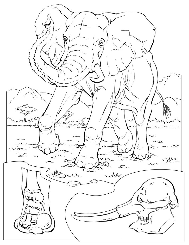 Elephant Coloring Pages For Preschool