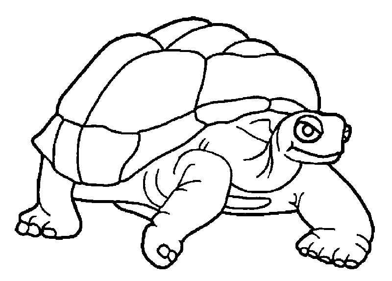 Finger Tortoise Turtle Coloring Page