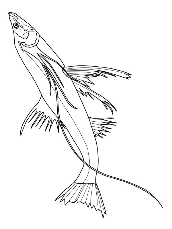 Fish Coloring Pages For Preschoolers