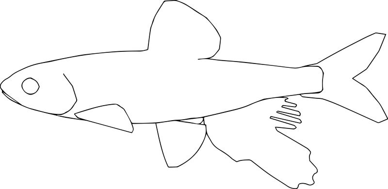 Fish22 Coloring Page