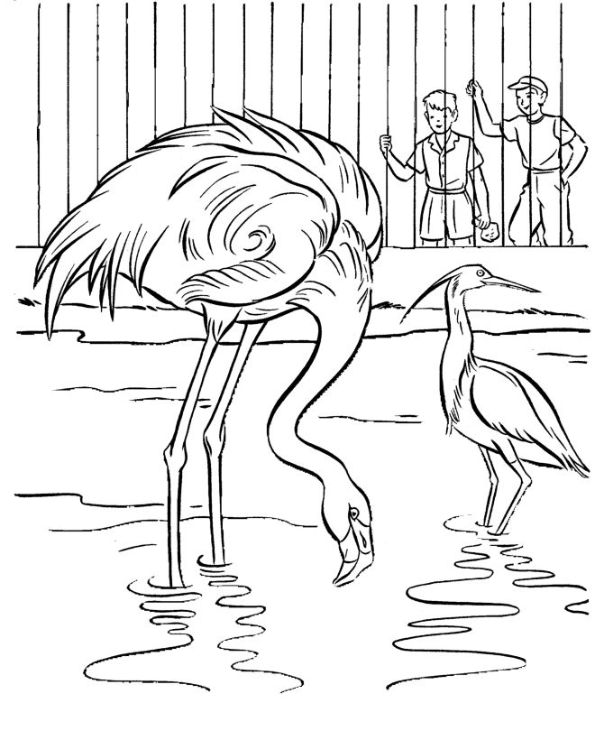 Flamingo Zoo Animals Coloring Pages