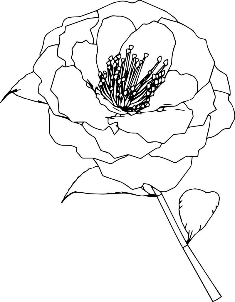 Flower 1 Coloring Page