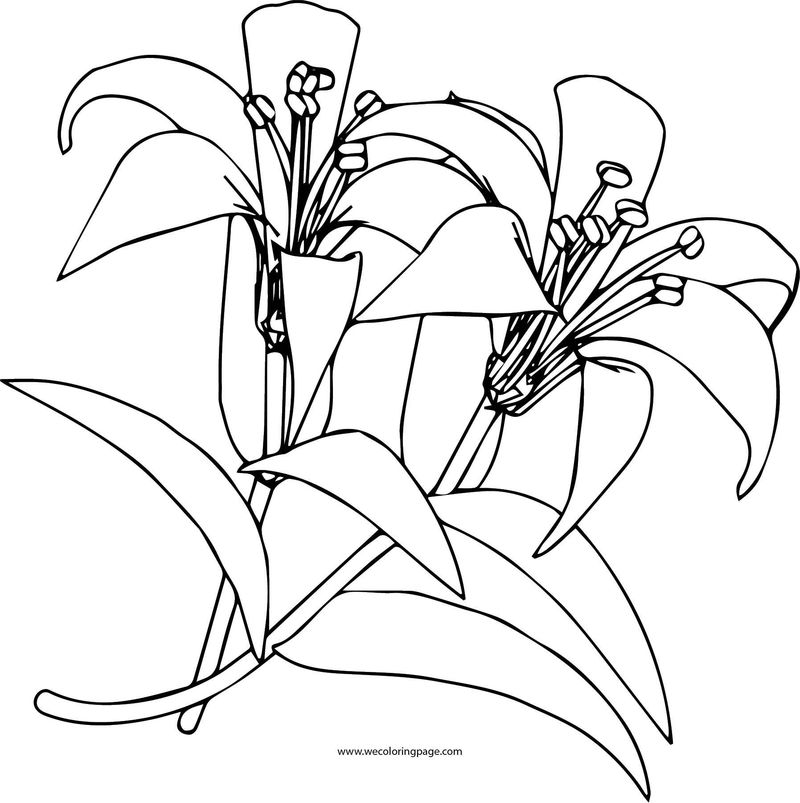 Flower 5 Coloring Page