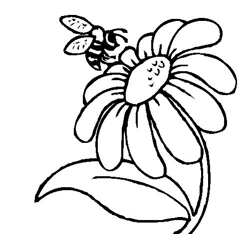 Flower Coloring Pages Daisy