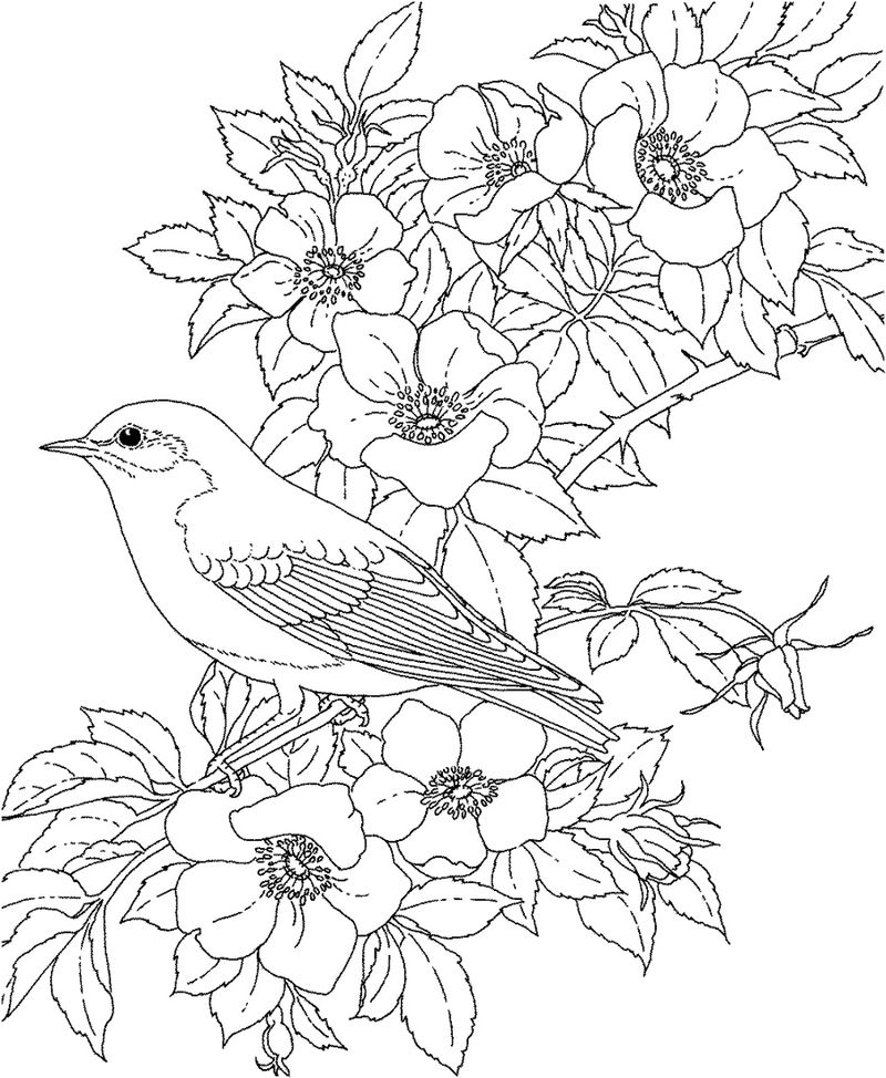 Flower Coloring Pages For Adults 001