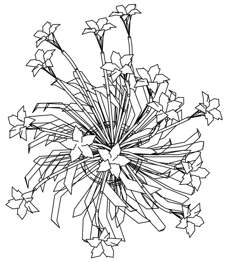 Flower Top View Coloring Page