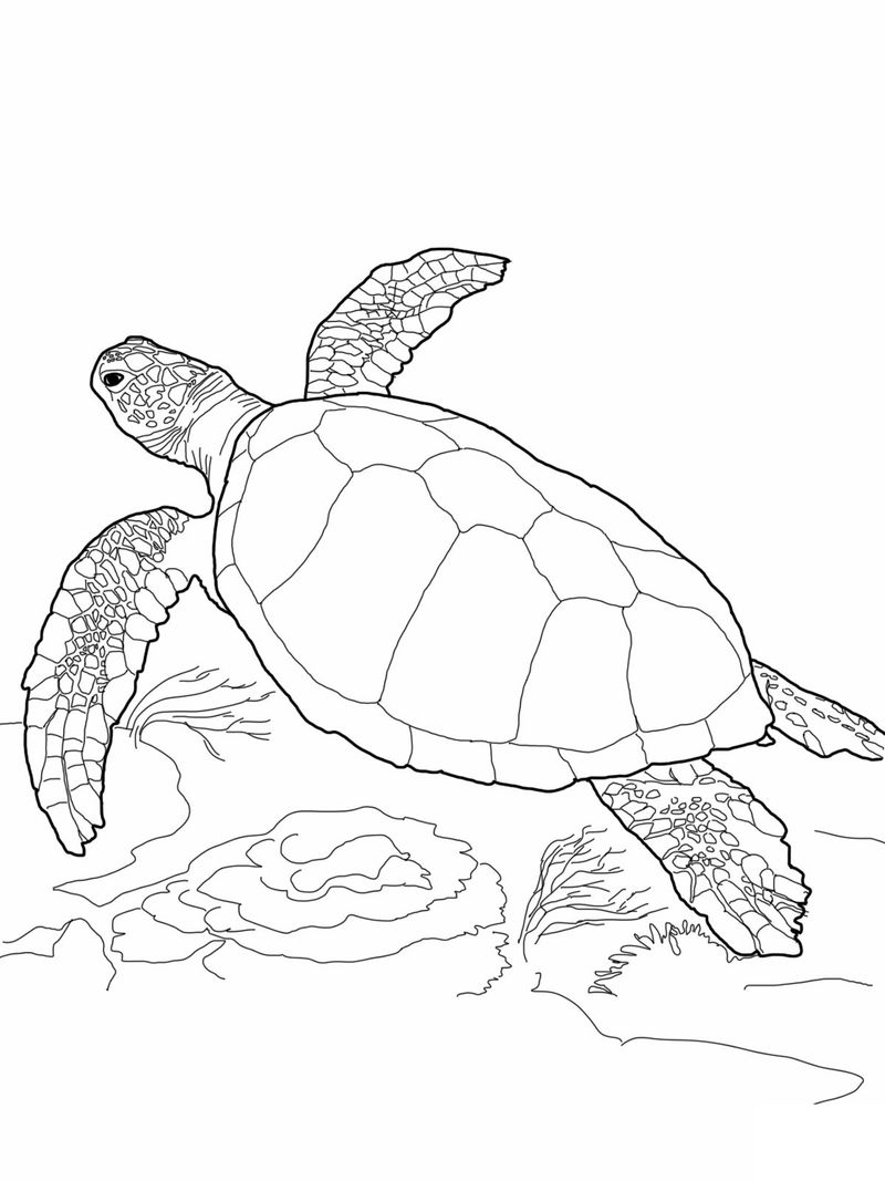 Free Coloring Pages Of Turtles