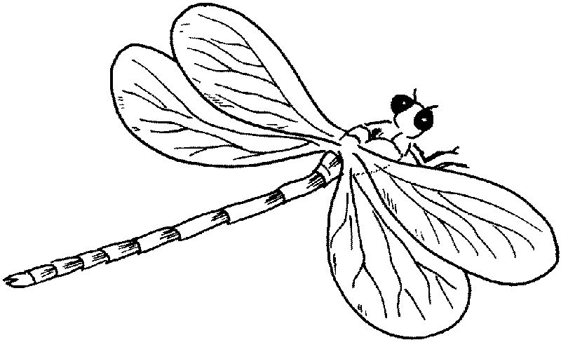 Free Dragonfly Coloring Pages