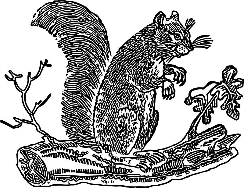 Free Fall Primitive Squirrels The Graphics Fairy Coloring Page