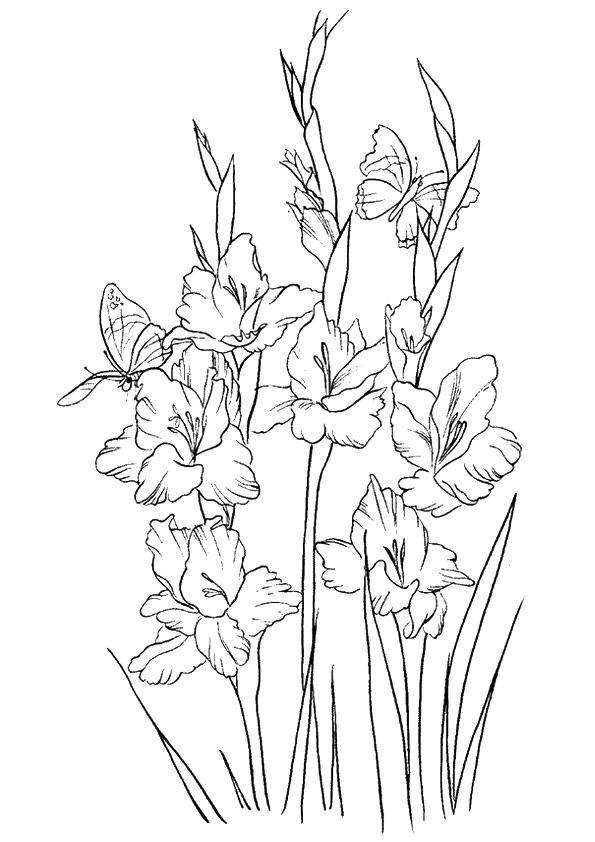 Free Gladiolus Flowers To Color 001