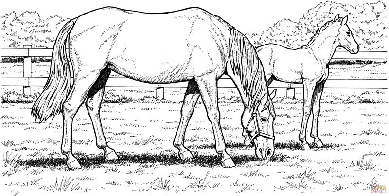 Free Printable Realistic Horse Coloring Page