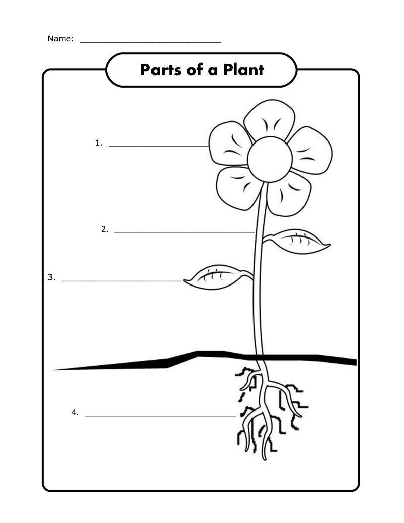 Free Science Worksheets Plant