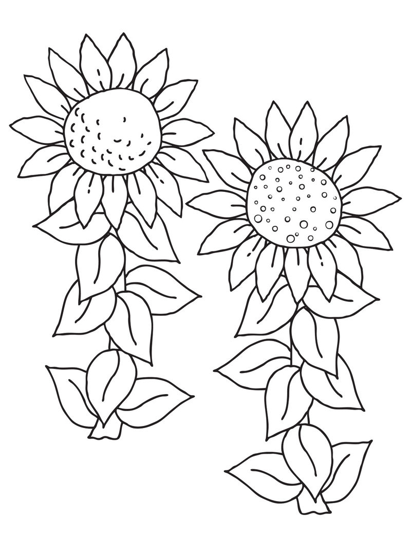 Free Sunflower Coloring Pages 001