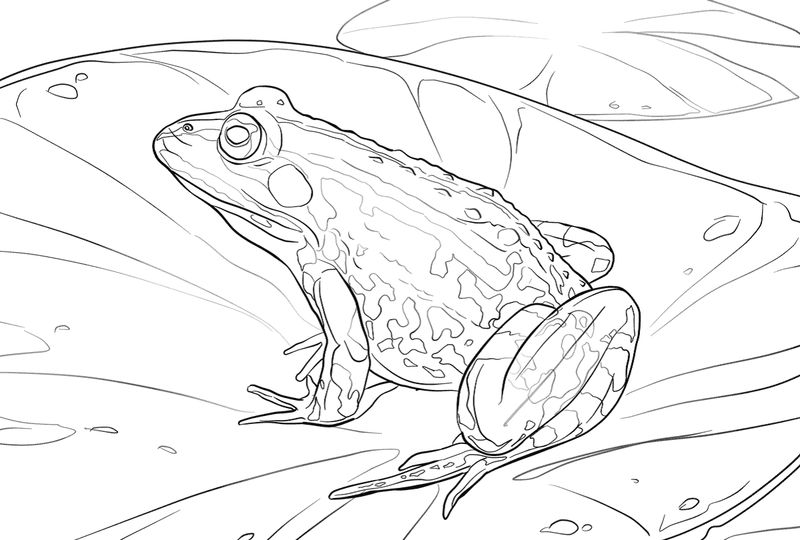 Frog Color Pages In Water 002