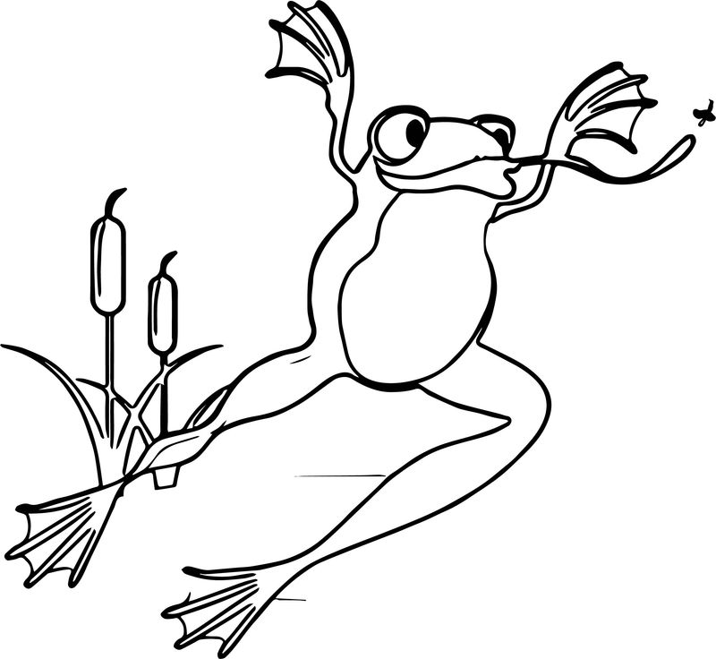 Frog Jump Coloring Page