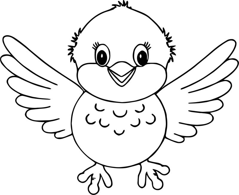 Front Of Bird Coloring Page