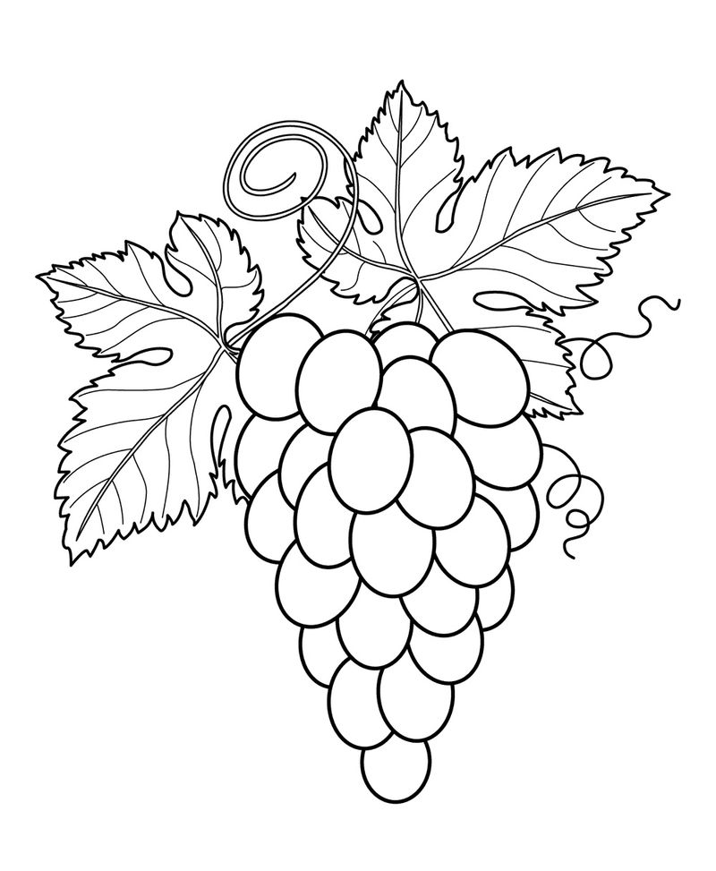 Fruit Coloring Pages 1