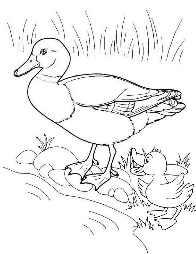 Fun Duck And Baby Coloring Page