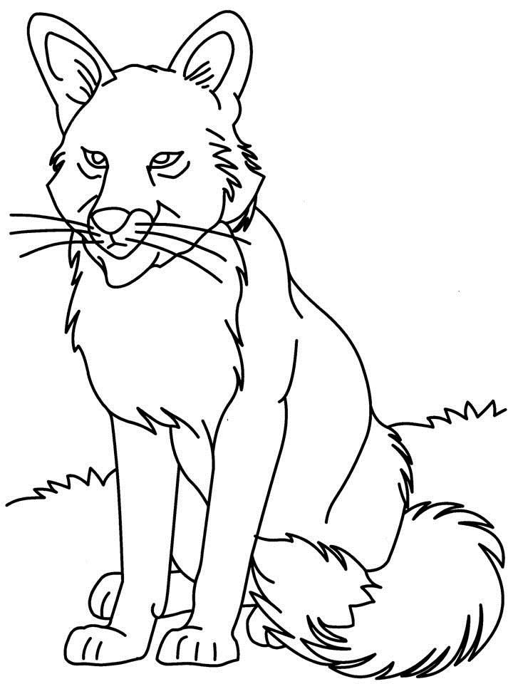 Grey Wolf Coloring Pages