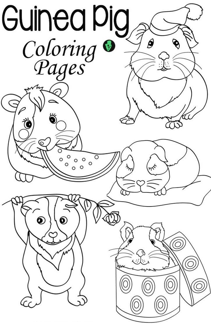 Guinea Pig Coloring Pages Printable