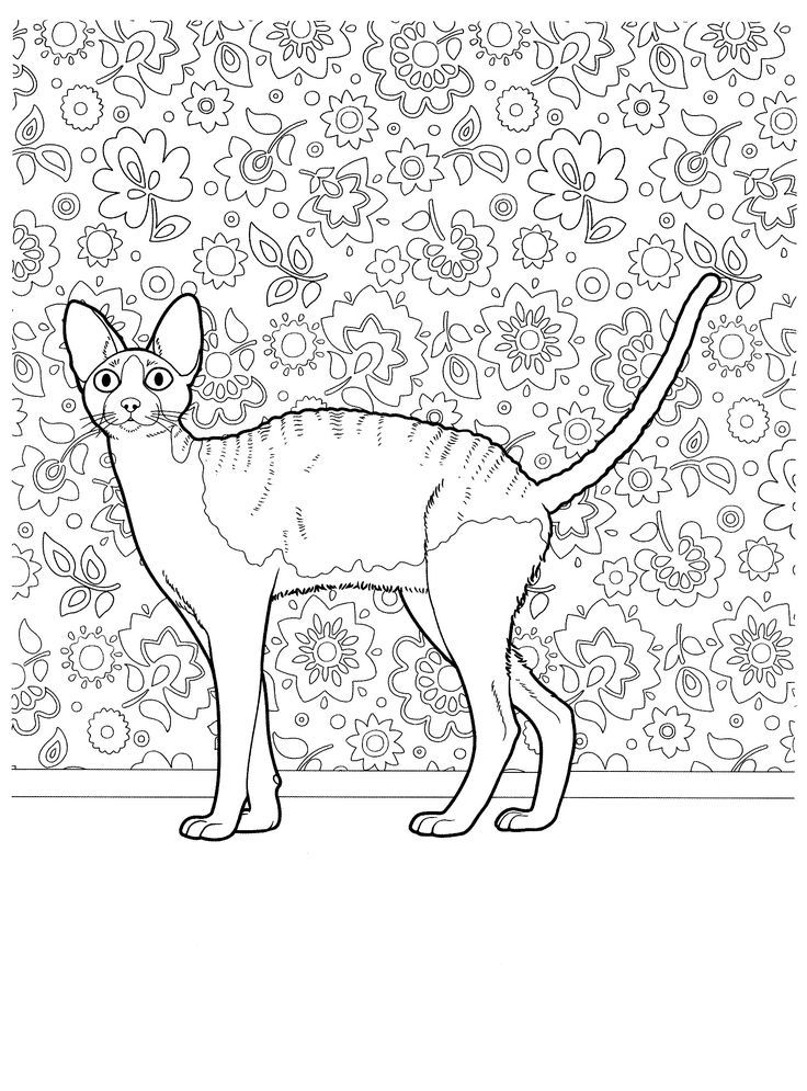 Hairless Cat Wallpaper Flowers Coloring Pages