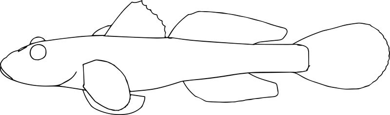 Haze Fish Coloring Page