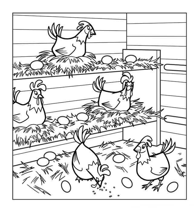 Hens Chicken Coloring Page