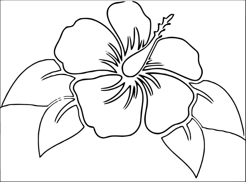 Hibiscus Flower 0 Coloring Page