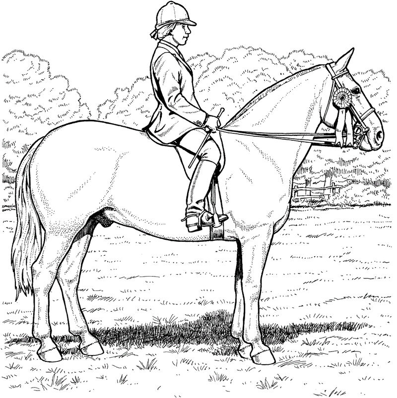 Horse Color Sheet And Man 001