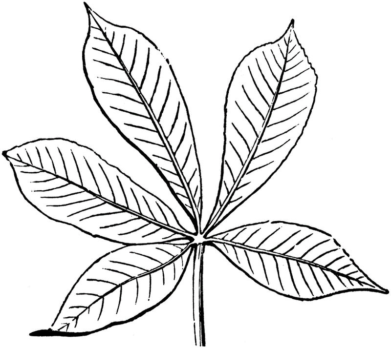 Leaf Coloring Page 2016