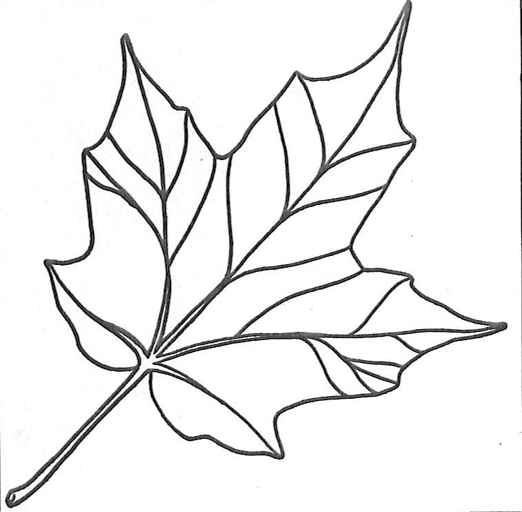 Leaf Coloring Page 5 001