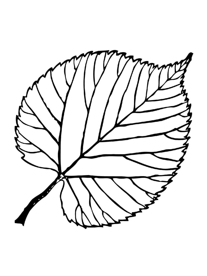 Leaf Coloring Pages For Preschool 001