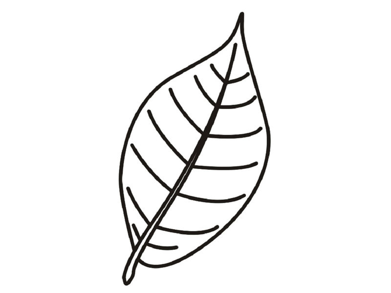 Leaf Coloring Pages Template Printable 001